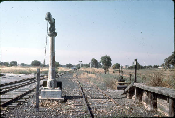 Boorowa yard looking toward Galong. The loco siding and 50' turntable were to the left in the grassy area.