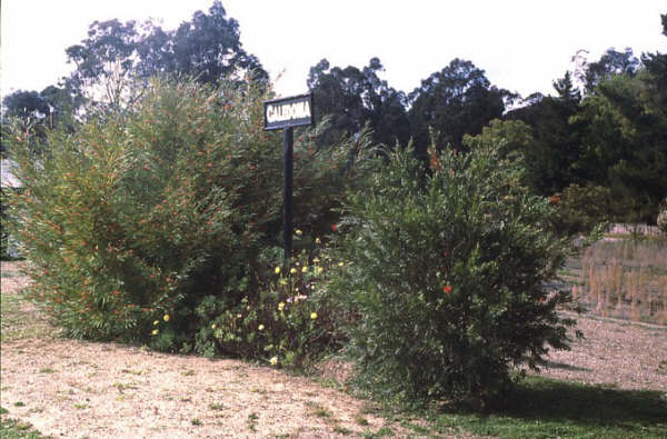 1986 sees the station sign at Caledonia peeking up from the bushes.