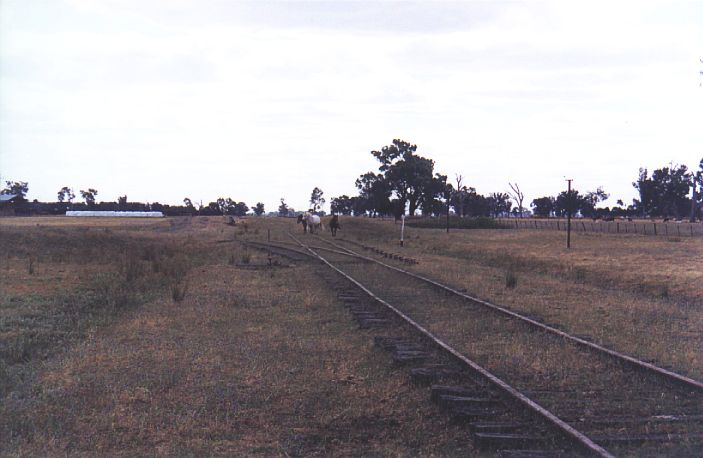 Horses now wander over the station at Fellow Hills.  The line branches off to the left to form the goods siding.  The main platform is behind the horses.