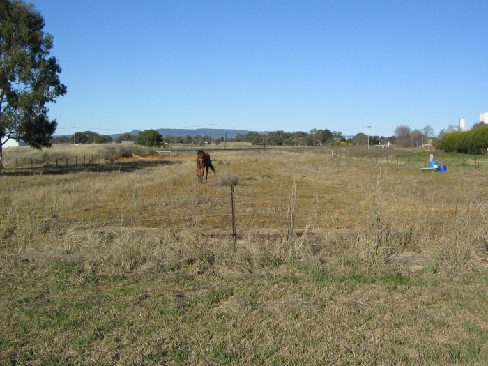 The formation of the proposed line to Mary Vale, where it approaches the main line,  visible in the distance. Gulgong - Mary Vale Line on what would be a level crossing. The horse is standing on the edge of what would be the perway.  From here, the line would have run alongside the main line into the station yard.
