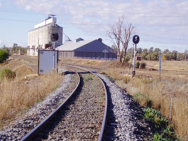 The junction of the Griffith and Hay lines at Yanco viewed from the Griffith branch.