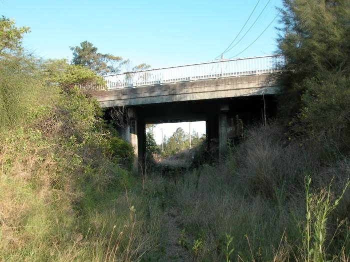 Between the Allowrie and Dairy Farmers Factories the branch line passes beneath the Pacific Highway. This view is taken from the Allowrie factory side looking towards the Dairy Farmers factory. The track is hidden in the long grass.