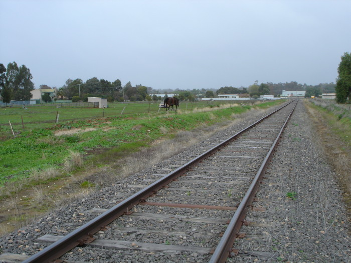 The view looking through the location of Mulwala, with possible platform remains on the left.