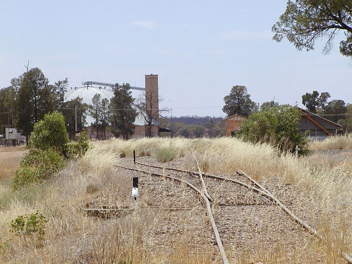 The view from the end of the line at Rankins Springs, looking east towards the silo.